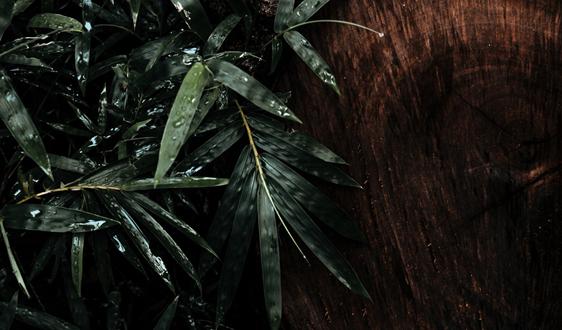 海关为竹、木、草制品生产企业送上梅雨季专项服务