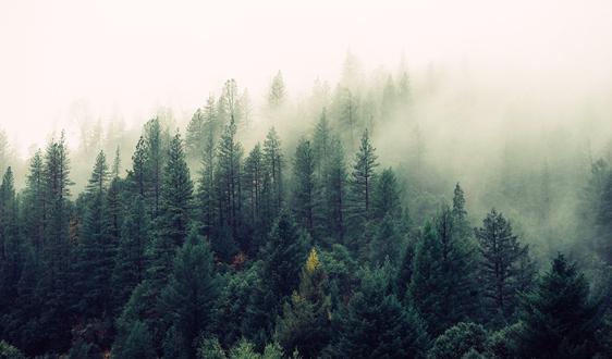 内蒙古大兴安岭人工造林70年成林80万公顷